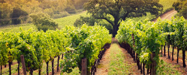 home_vineyard